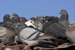 Bird Barrier Systems in Las Vegas